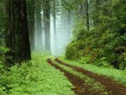 Südafrika: Die Highlights der Garden Route