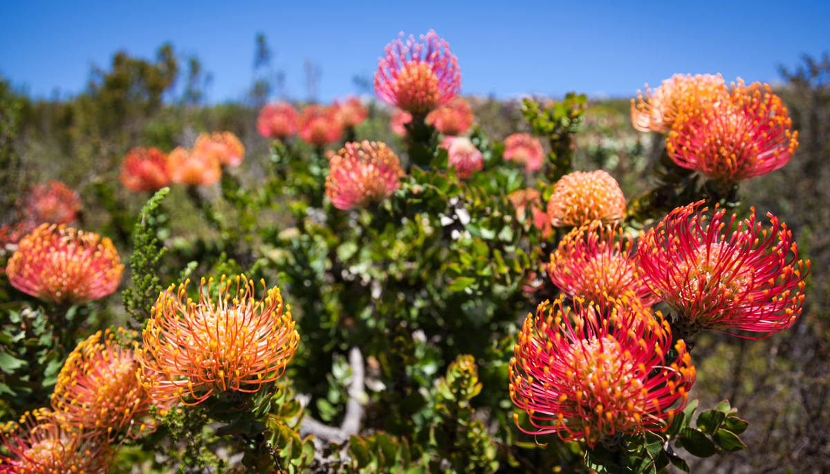 Ruhe, Abgeschiedenheit und Fynbos im 3Flavours Gästehaus