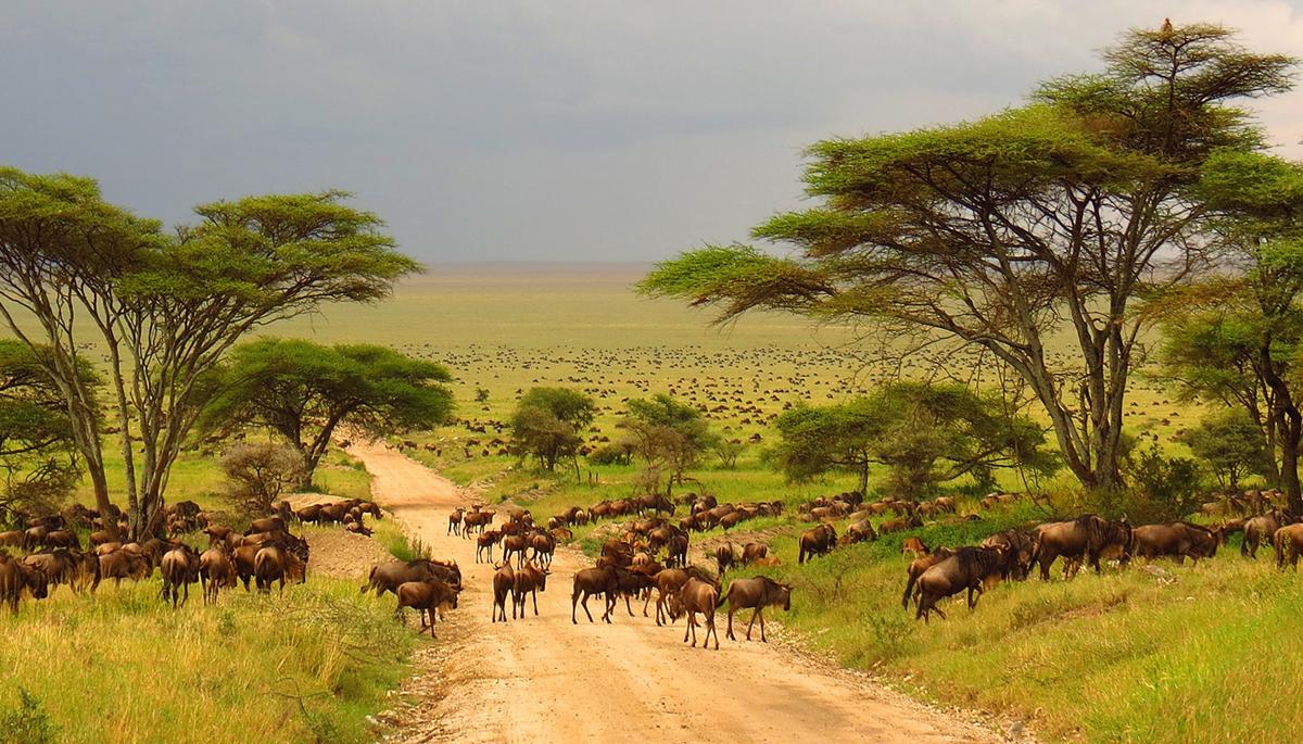 13 wichtige Infos für eine Safari im Krüger-Nationalpark