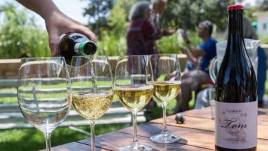 Wie finde ich den Richtigen? – Hinein in den Wein-Dschungel