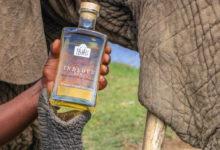 An diesem Gin sind Elefanten beteiligt - aber nicht so, wie Sie denken