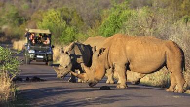 Südafrika öffnet Grenzen: Reisen ab Oktober erlaubt